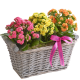 Happy Birthday Kalanchoe Basket